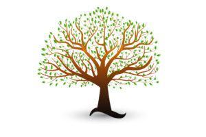 עץ משפחתי דרכון פורטוגלי - אילן יוחסין דרכון פורטוגלי - עו