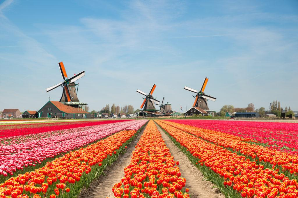 תחנות רוח בהולנד - עו